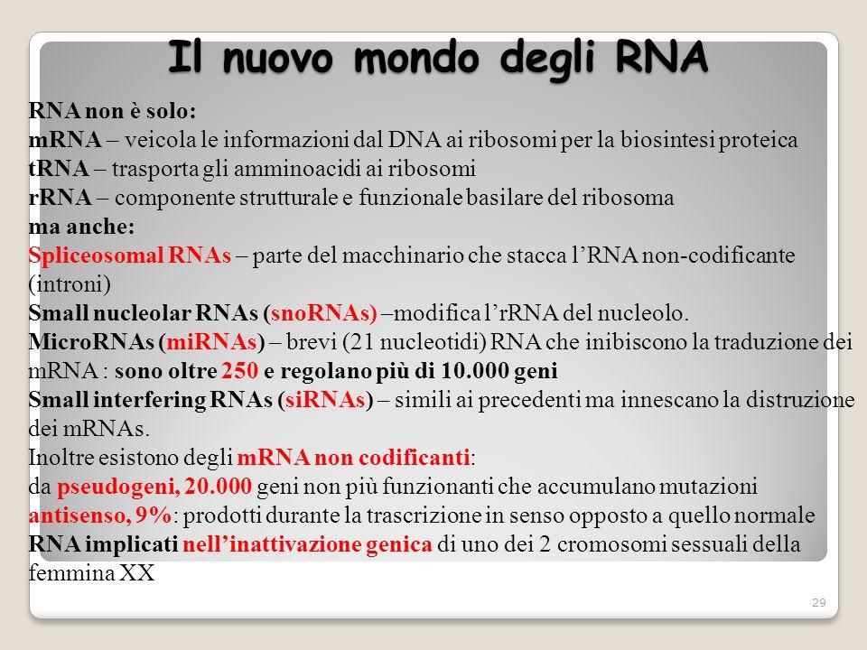 Il nuovo mondo degli RNA