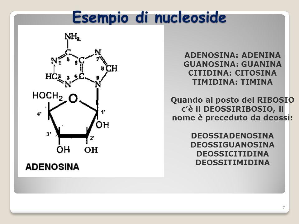 Esempio di nucleoside ADENOSINA: ADENINA GUANOSINA: GUANINA