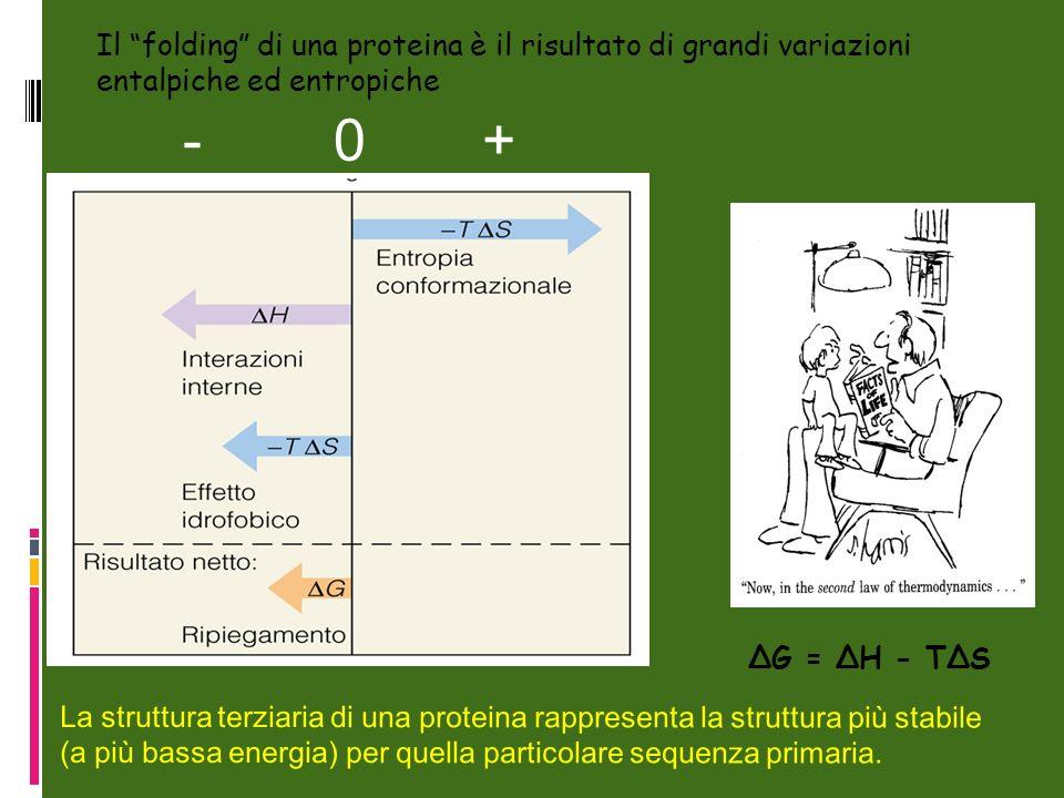 Il folding di una proteina è il risultato di grandi variazioni entalpiche ed entropiche