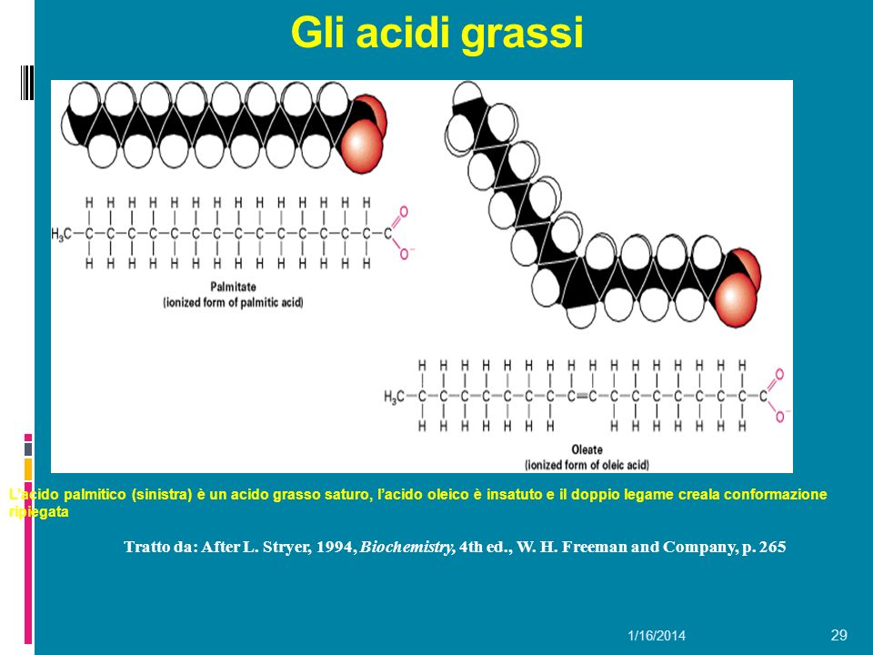 Gli acidi grassi L'acido palmitico (sinistra) è un acido grasso saturo, l'acido oleico è insatuto e il doppio legame creala conformazione ripiegata.