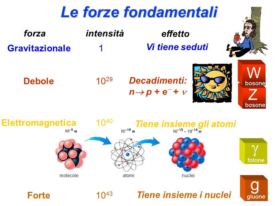 g g Le forze fondamentali W Z forza intensità effetto Vi tiene seduti