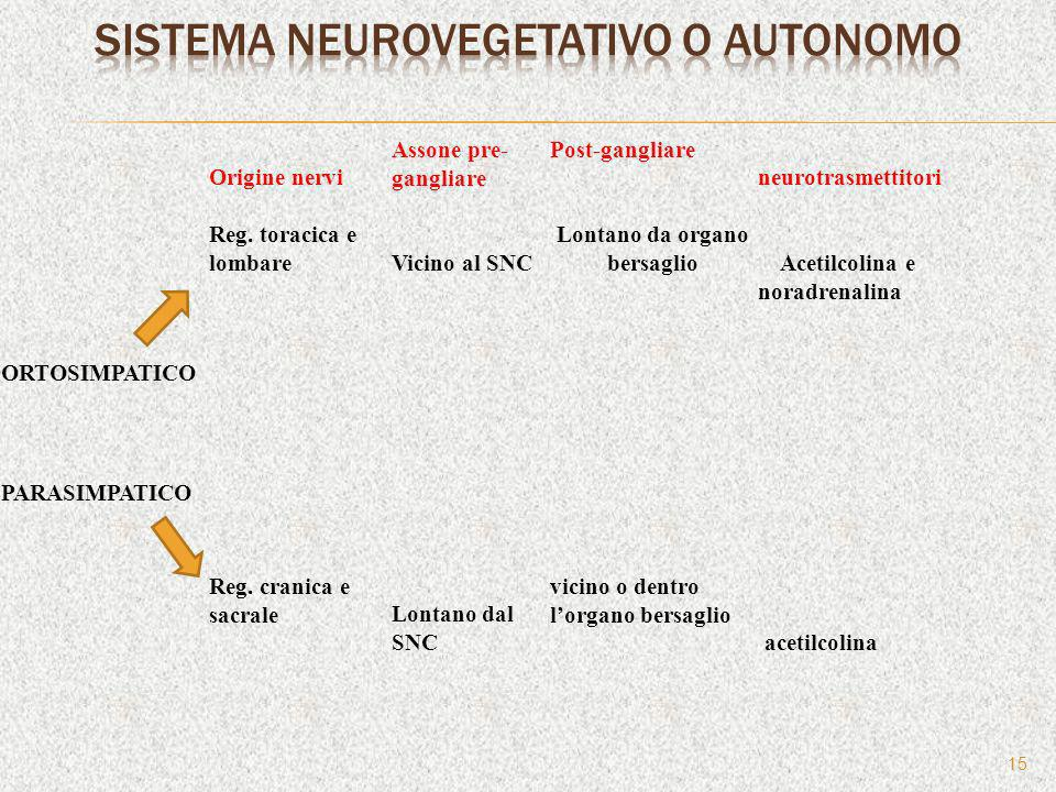 Sistema neurovegetativo o autonomo
