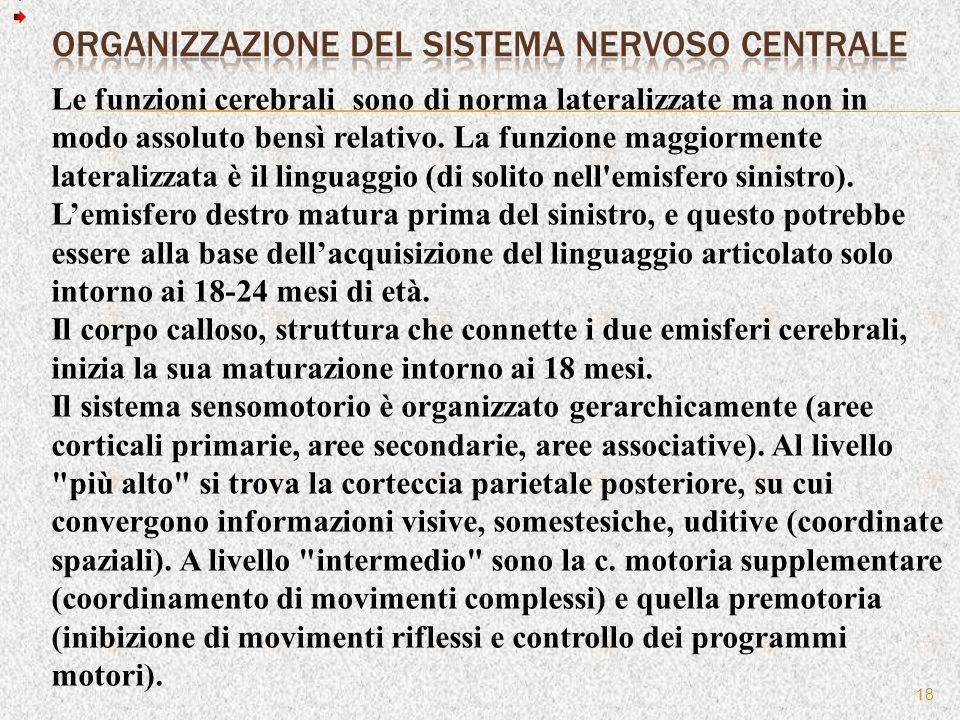 Organizzazione del Sistema nervoso centrale