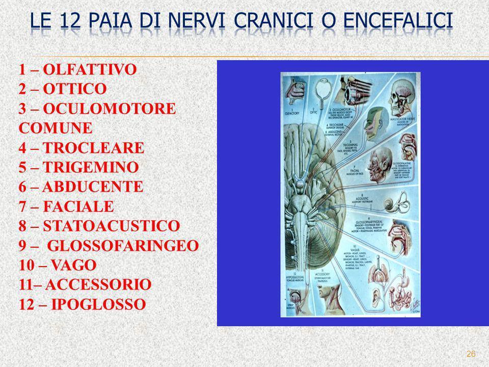 Le 12 paia di nervi cranici o encefalici