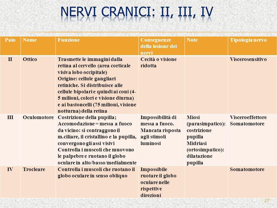 nervi cranici: II, III, IV