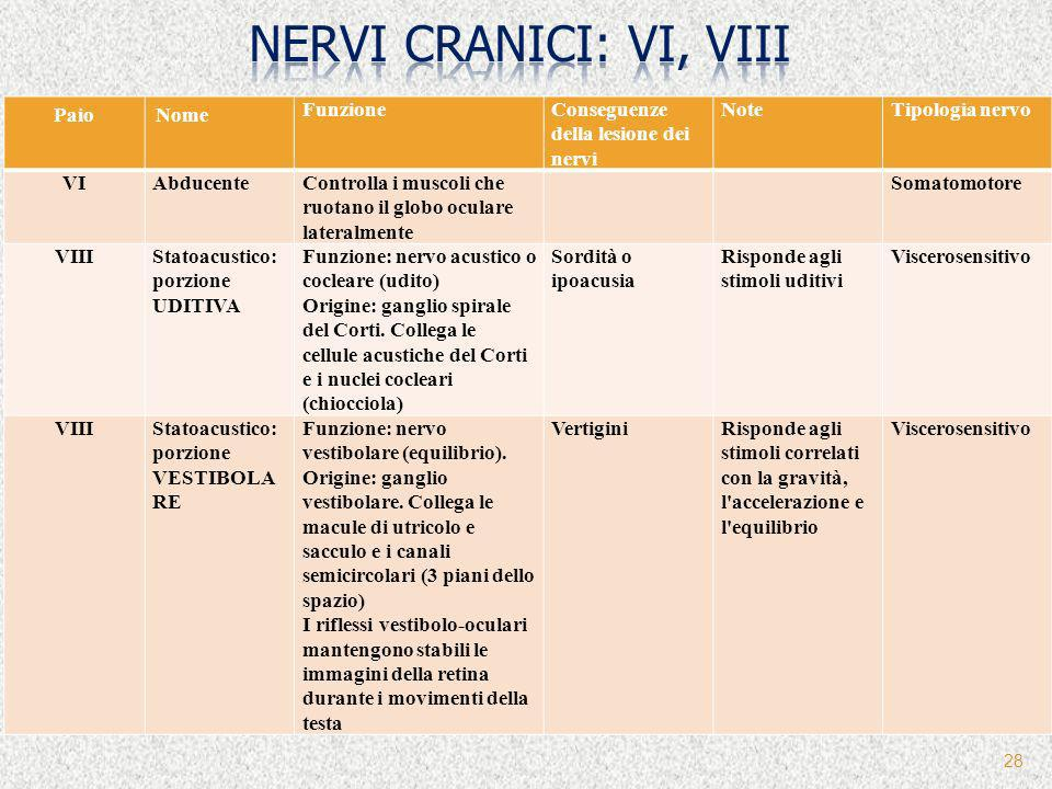 nervi cranici: VI, VIII Paio Nome Funzione