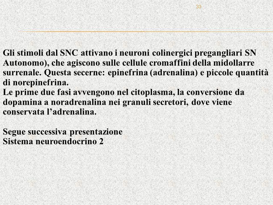 Gli stimoli dal SNC attivano i neuroni colinergici pregangliari SN Autonomo), che agiscono sulle cellule cromaffini della midollarre surrenale. Questa secerne: epinefrina (adrenalina) e piccole quantità di norepinefrina.