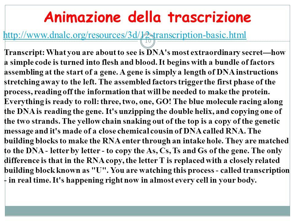 Animazione della trascrizione