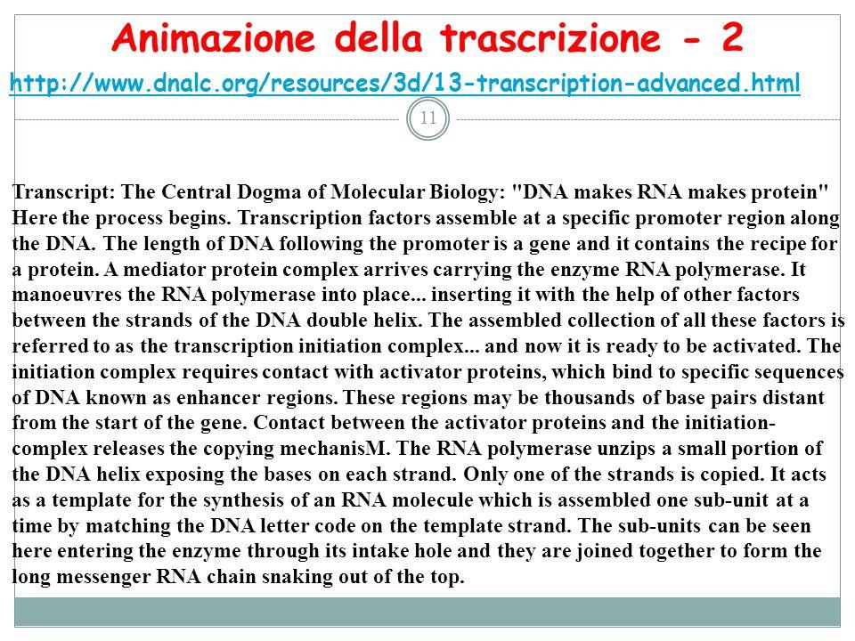Animazione della trascrizione - 2