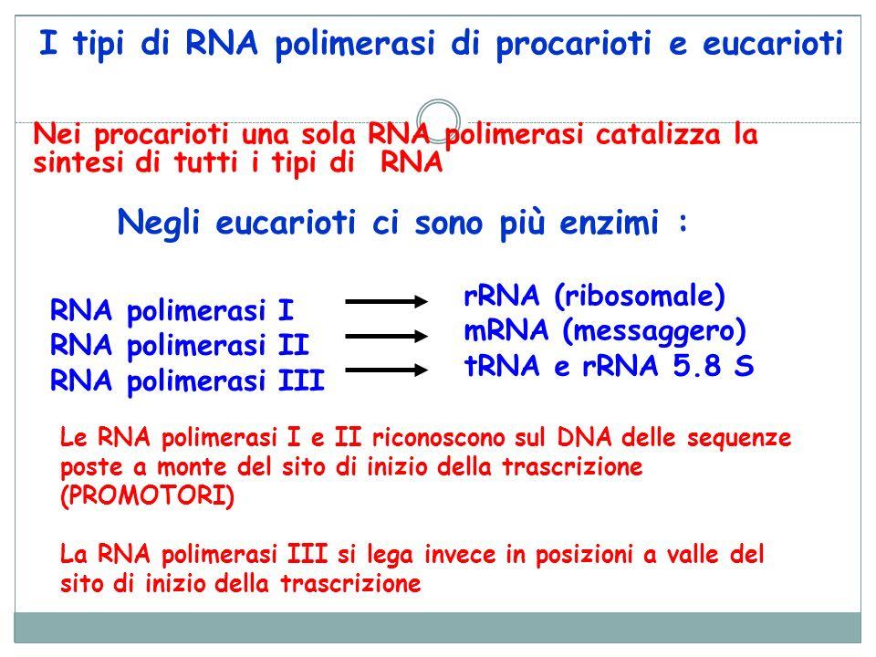 I tipi di RNA polimerasi di procarioti e eucarioti