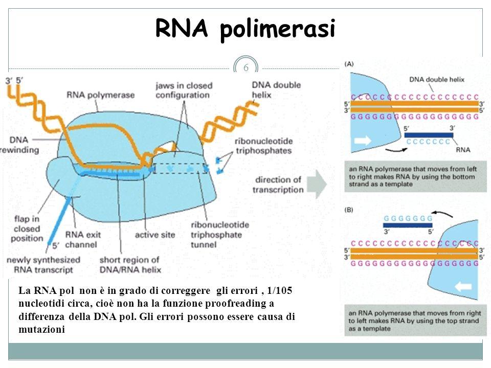RNA polimerasi