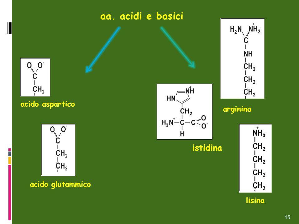 aa. acidi e basici istidina acido aspartico arginina acido glutammico