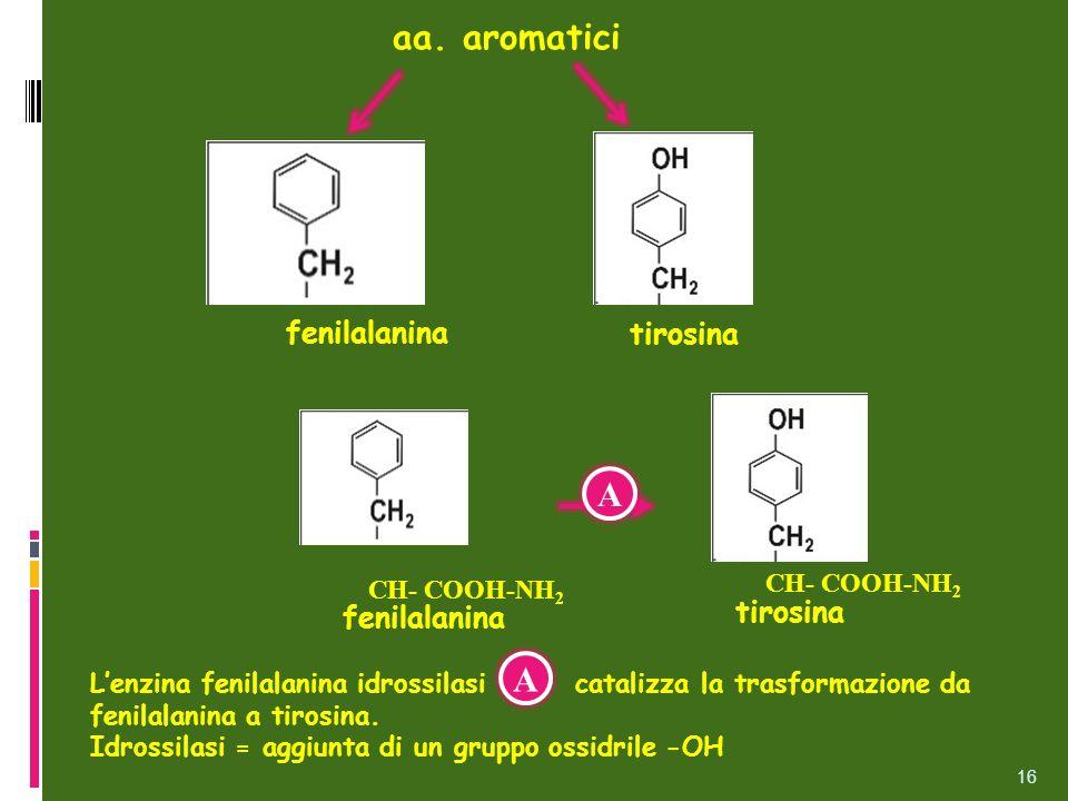 aa. aromatici A A fenilalanina tirosina tirosina fenilalanina
