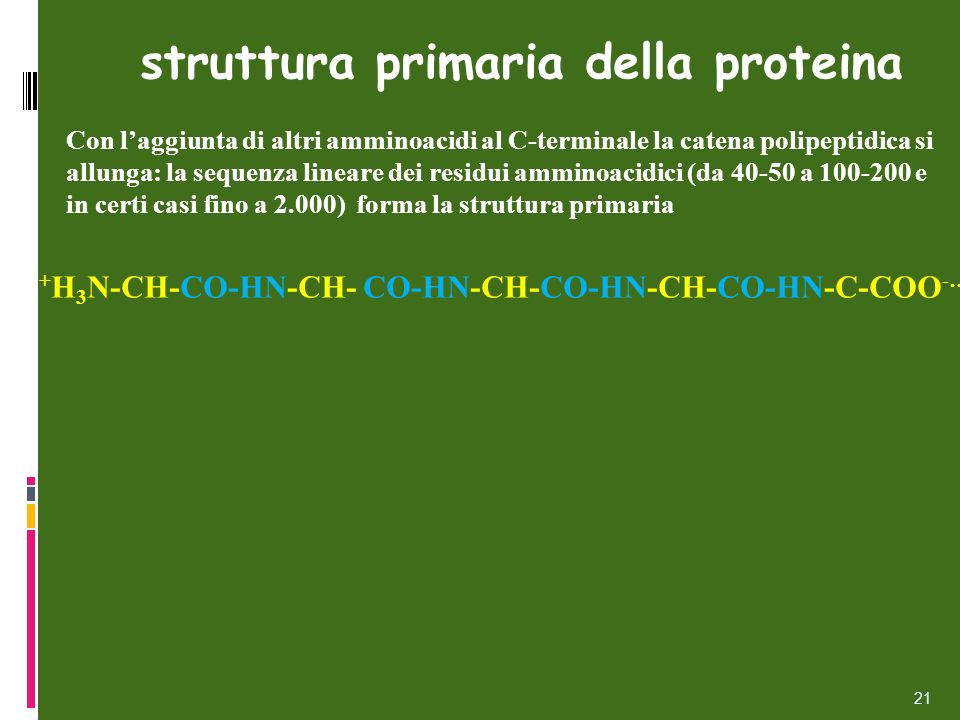 struttura primaria della proteina