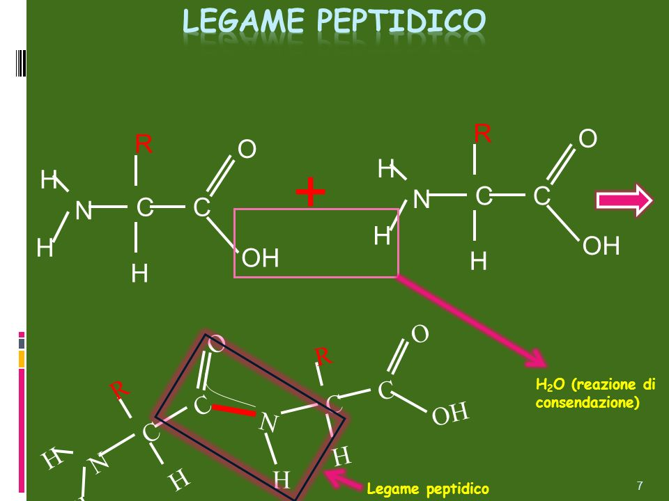 + Legame peptidico R O R O C N C N H H OH OH O R OH C N H