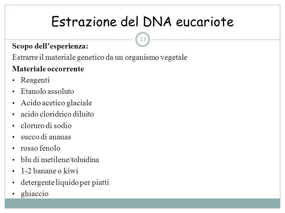 Estrazione del DNA eucariote