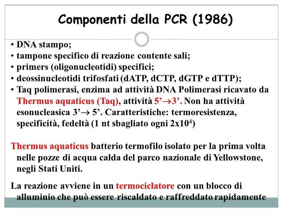 Componenti della PCR (1986)