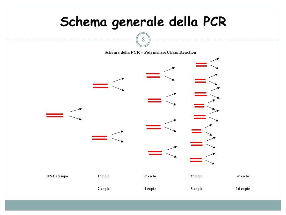 Schema generale della PCR
