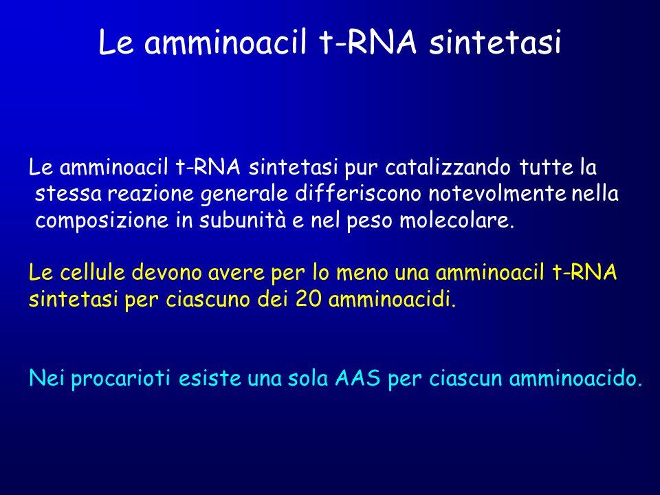 Le amminoacil t-RNA sintetasi