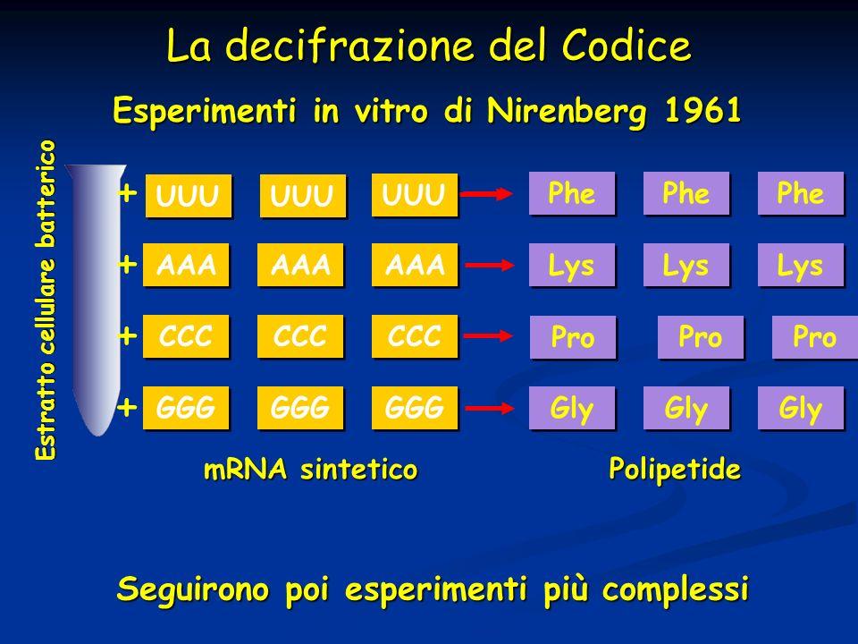 La decifrazione del Codice