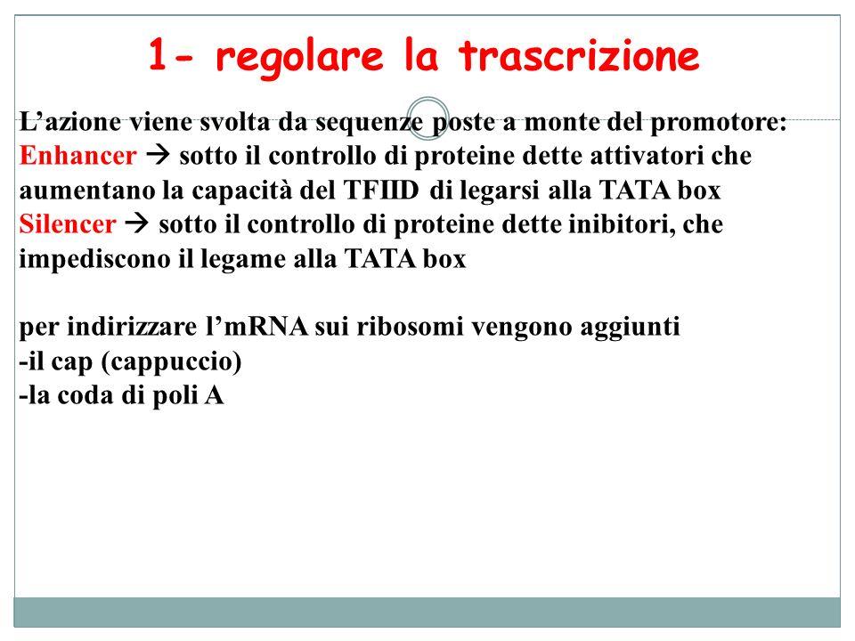 1- regolare la trascrizione