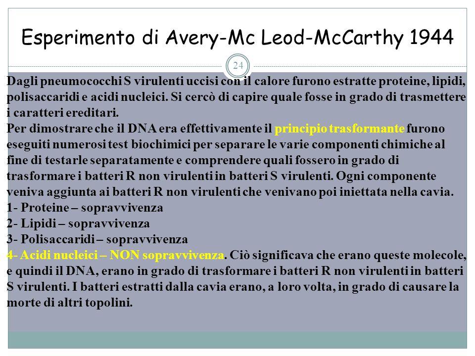 Esperimento di Avery-Mc Leod-McCarthy 1944