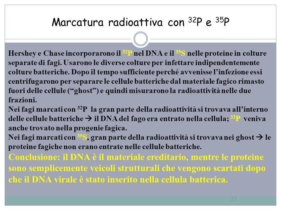 Marcatura radioattiva con 32P e 35P