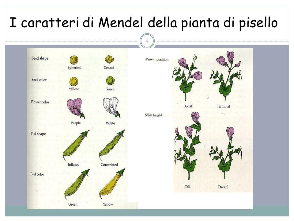 I caratteri di Mendel della pianta di pisello