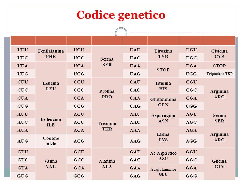 Codice genetico UUU Fenilalanina PHE UCU Serina SER UAU Tiroxina TYR