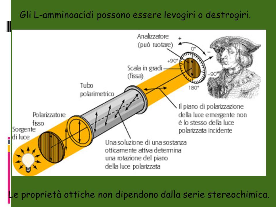 Gli L-amminoacidi possono essere levogiri o destrogiri.
