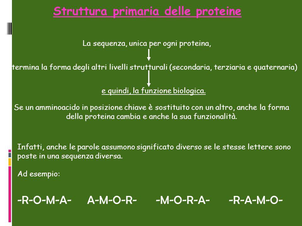 Struttura primaria delle proteine