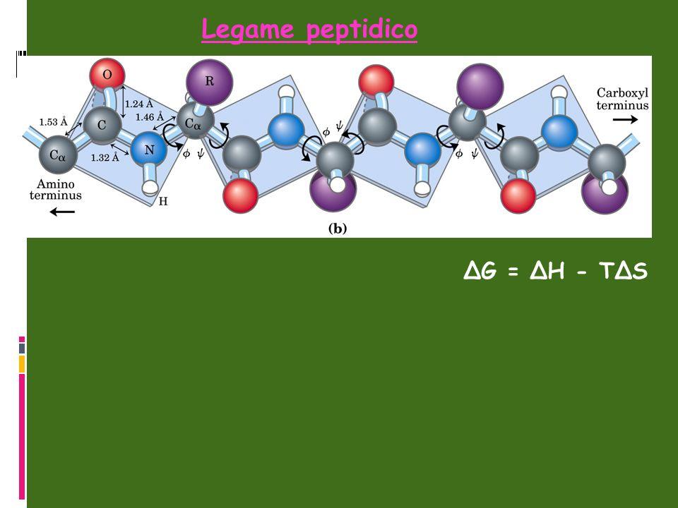 Legame peptidico ΔG = ΔH - TΔS