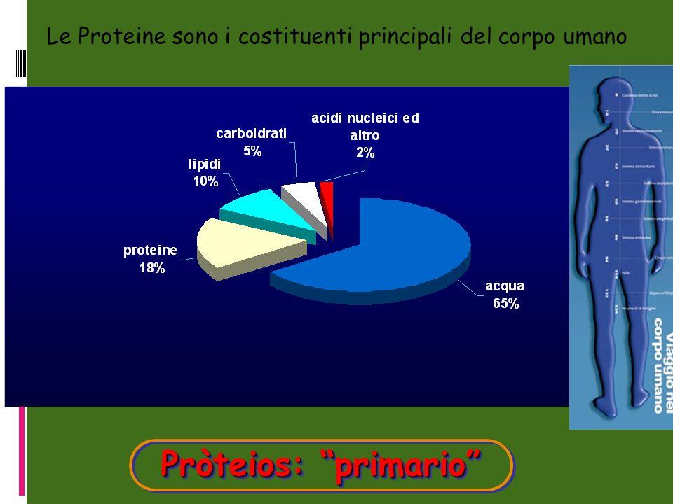 Le Proteine sono i costituenti principali del corpo umano