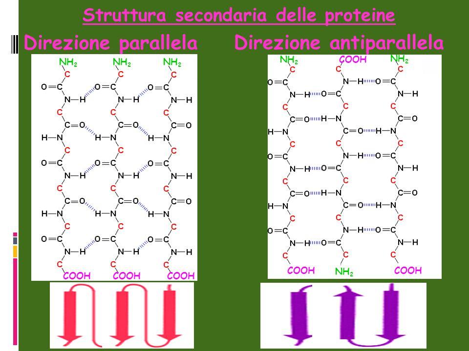 Struttura secondaria delle proteine