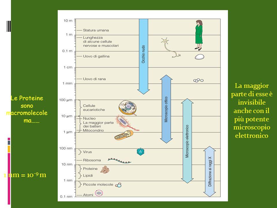 Le Proteine sono macromolecole