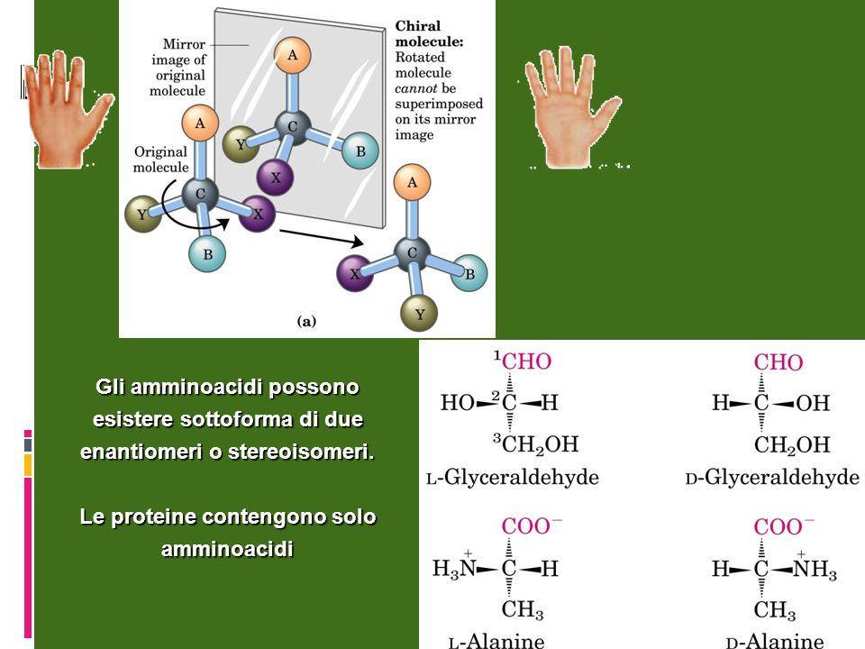 Le proteine contengono solo amminoacidi