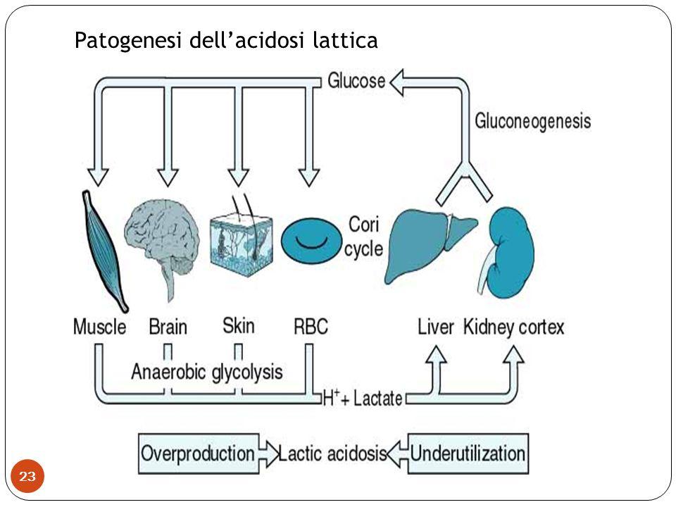 Patogenesi dell'acidosi lattica