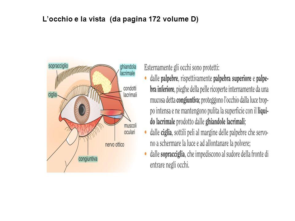 L'occhio e la vista (da pagina 172 volume D)