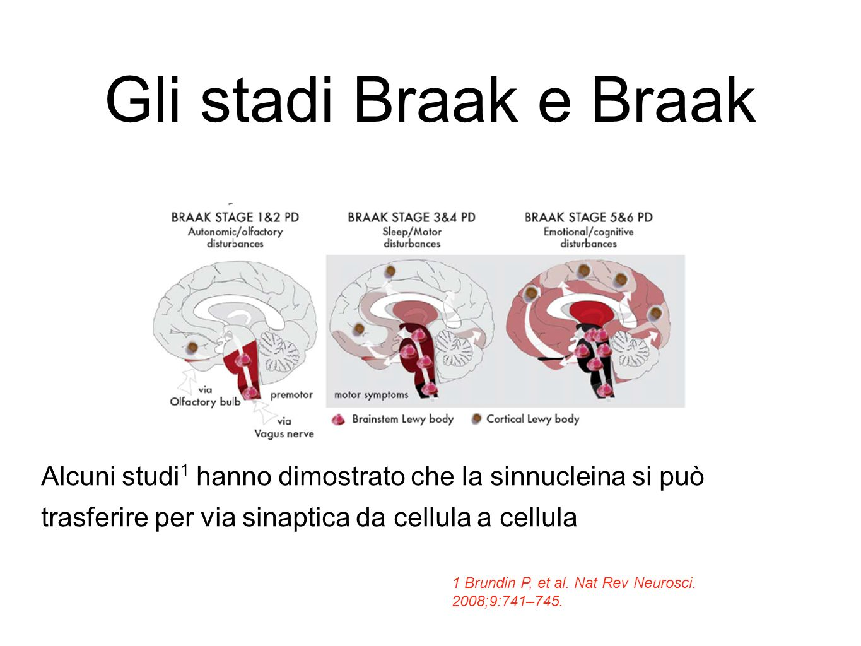 Gli stadi Braak e Braak Alcuni studi1 hanno dimostrato che la sinnucleina si può trasferire per via sinaptica da cellula a cellula.