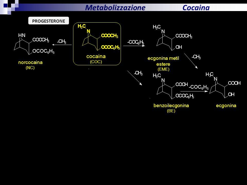 Metabolizzazione Cocaina cocaina PROGESTERONE N O C H + N C O H HN C O