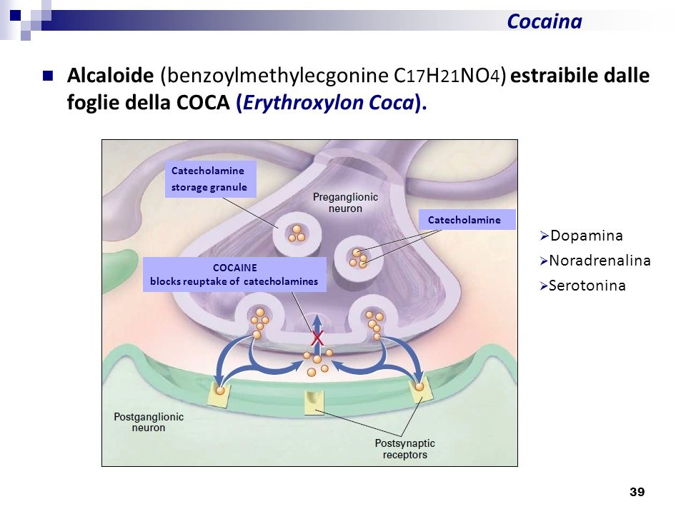 Cocaina Alcaloide (benzoylmethylecgonine C17H21NO4) estraibile dalle foglie della COCA (Erythroxylon Coca).
