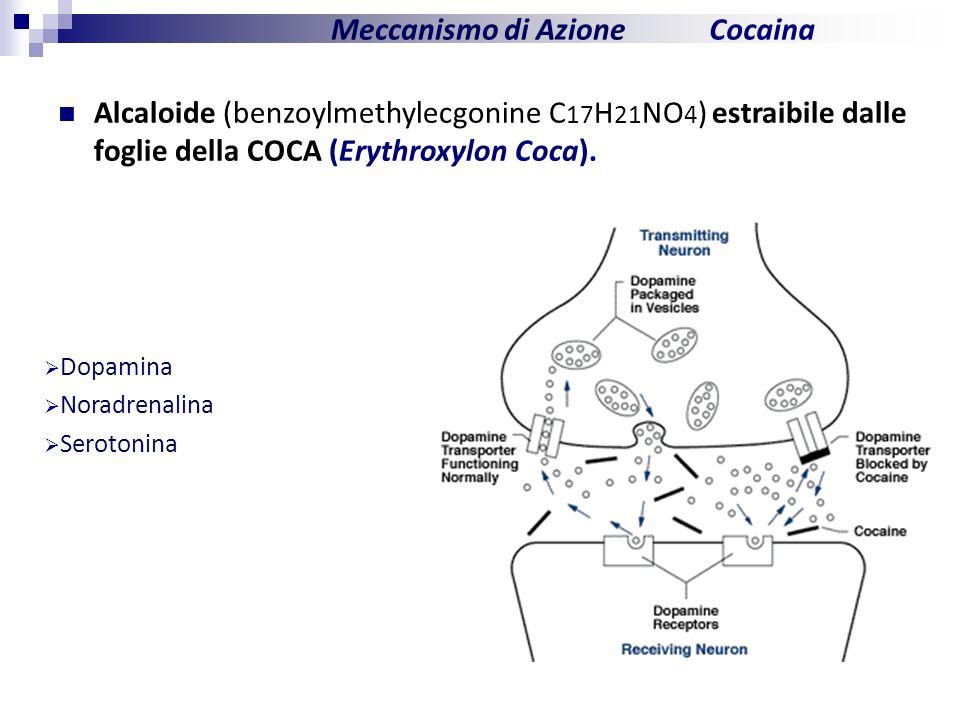 Meccanismo di Azione Cocaina