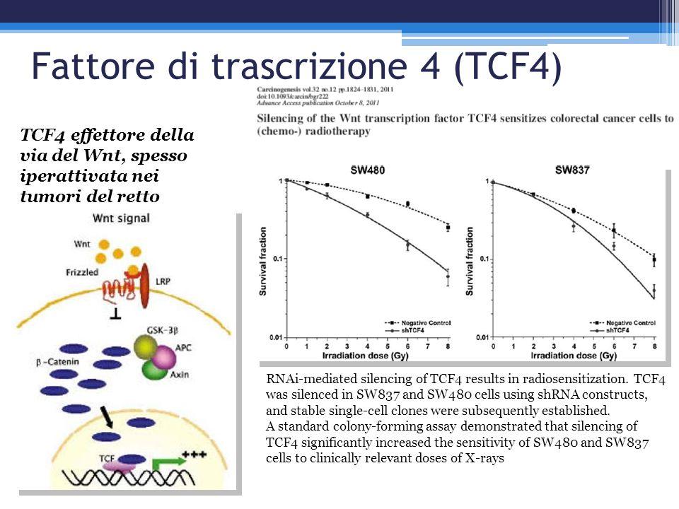 Fattore di trascrizione 4 (TCF4)