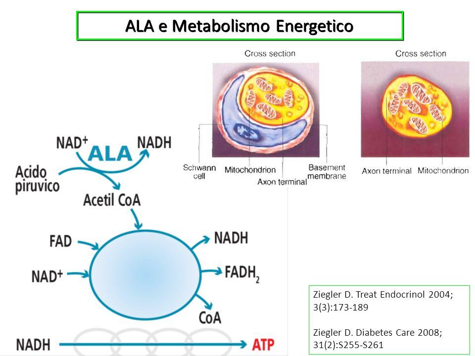ALA e Metabolismo Energetico