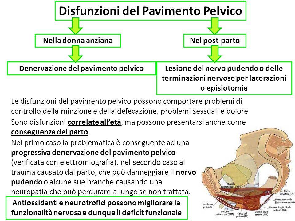 Disfunzioni del Pavimento Pelvico Denervazione del pavimento pelvico