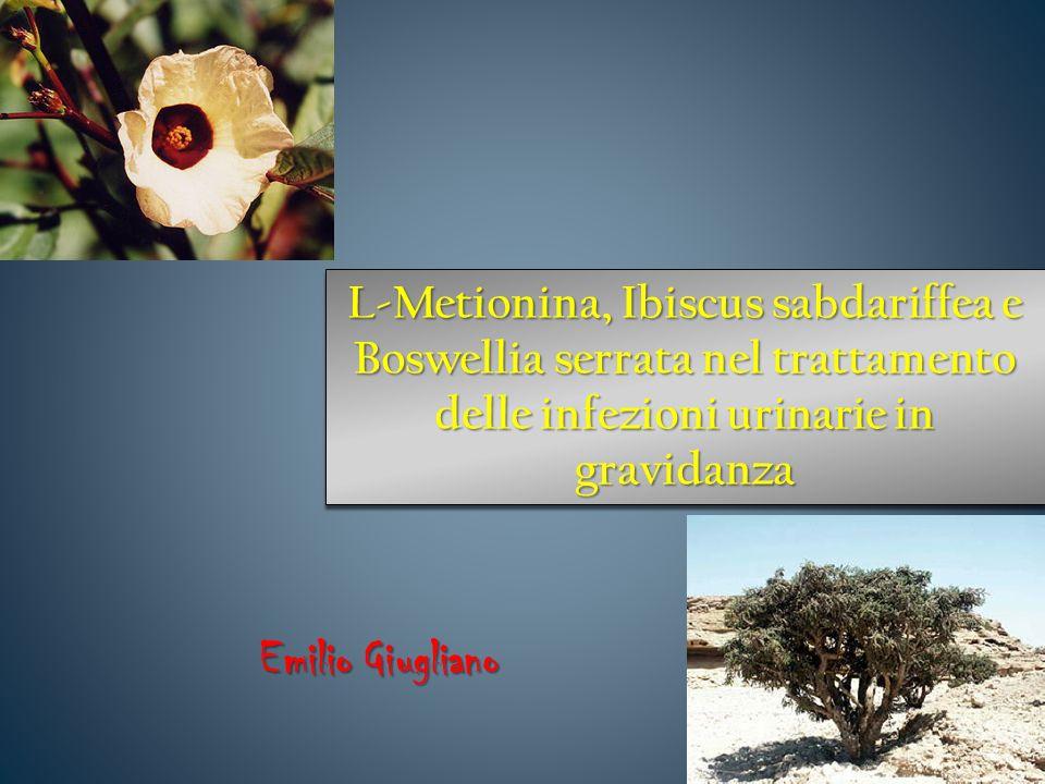 L-Metionina, Ibiscus sabdariffea e Boswellia serrata nel trattamento delle infezioni urinarie in gravidanza