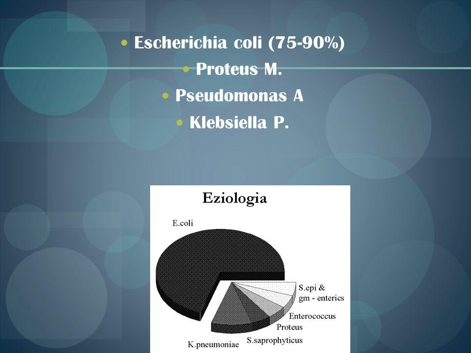Escherichia coli (75-90%) Proteus M. Pseudomonas A Klebsiella P.