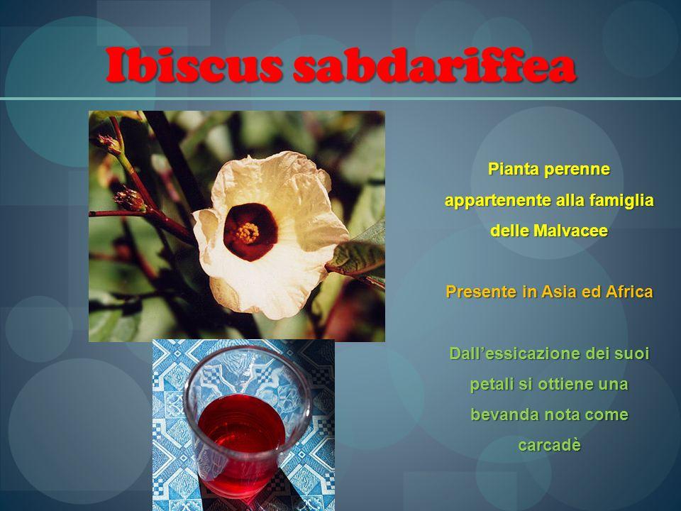 Ibiscus sabdariffea Pianta perenne appartenente alla famiglia delle Malvacee. Presente in Asia ed Africa.