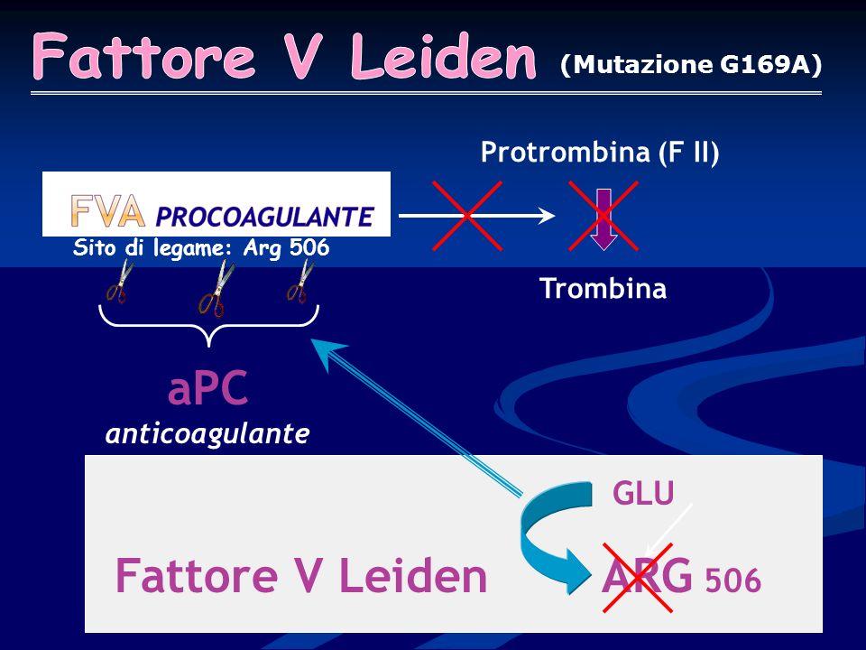 aPC anticoagulante Fattore V Leiden ARG 506 Fattore V Leiden GLU