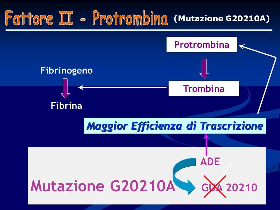 Fattore II - Protrombina Maggior Efficienza di Trascrizione